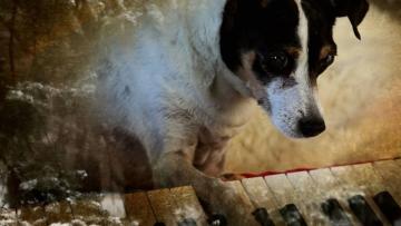 'Srce jednog psa'