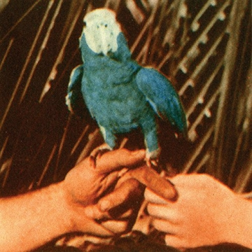 Andrew Bird 'Are You Serious'