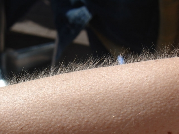 Reagirate li nekad na glazbu ježenjem? (Foto: Wikipedia)