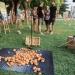 Pobijedimo tišinu: Ispred šibenskog Azimuta krumpiri zamijenili zvučnike i glazbenike